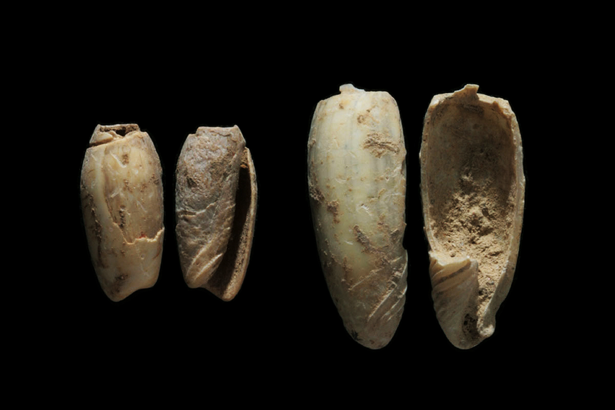 Oldest shell jewellery found in East Asia