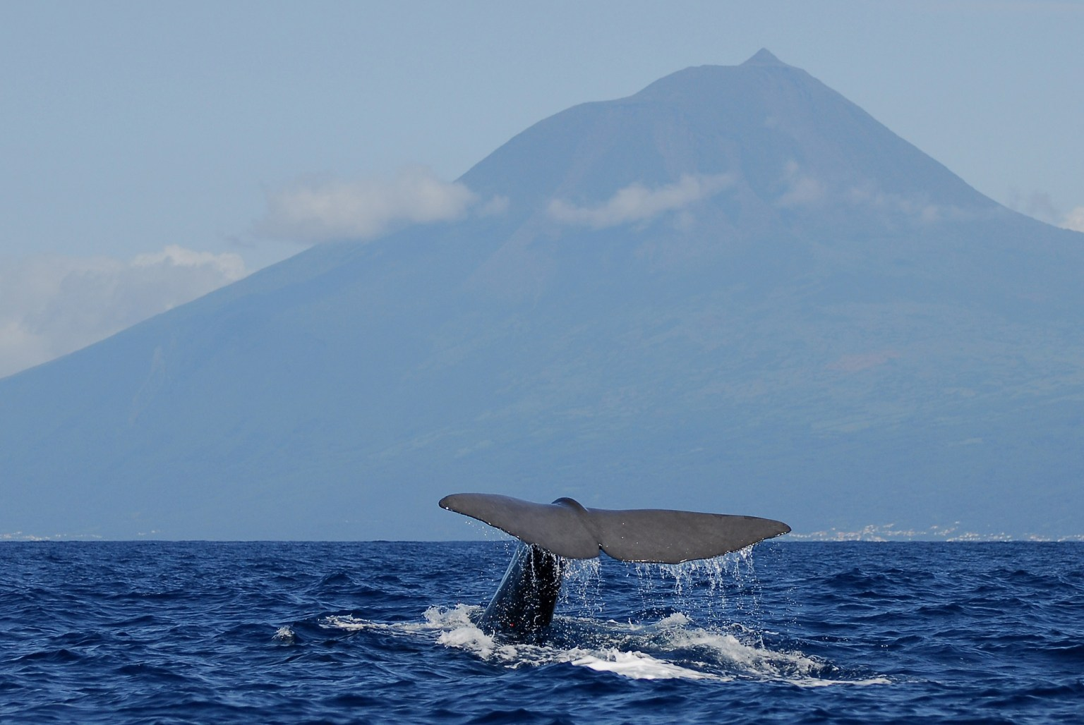 A whale of a time: the world's best whale-watching destinations