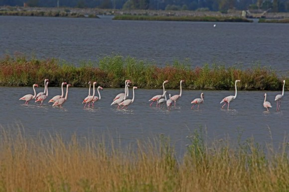 Flamingos Parco del Delto del Po Italy travel lockdown