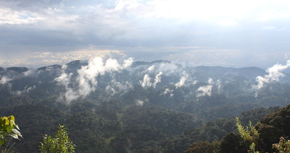 Nyungwe Forest National Park, Rwanda by Anna Moores