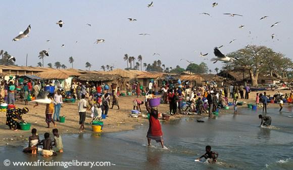Fish market, Tanji, The Gambia by Ariadne Van Zandbergen
