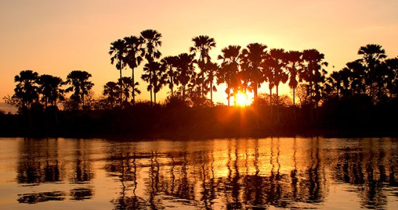 Palm trees Liwonde National Park by Malawi Tourism