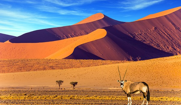 oryx, Namib desert, Namibia by Kavram, Shutterstock