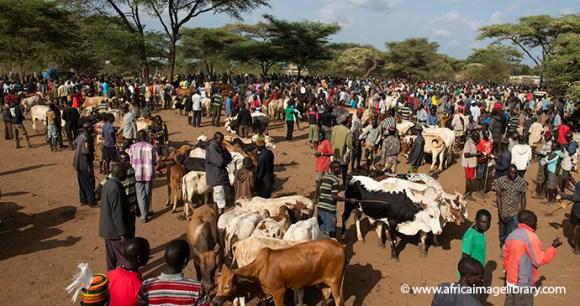 Moroto Cattle Market Uganda by Ariadne Van Zanbergen Africa Image Library best markets in the world