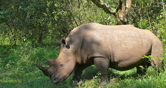 Ziwa Rhino by Bernard Dupot