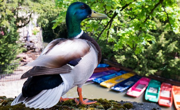 Hunting the Mallard quirky Oxford event UK by Shutterstock
