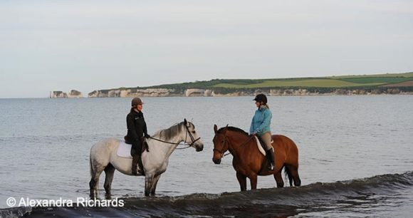 Studland Dorset British Isles by Alexandra Richards