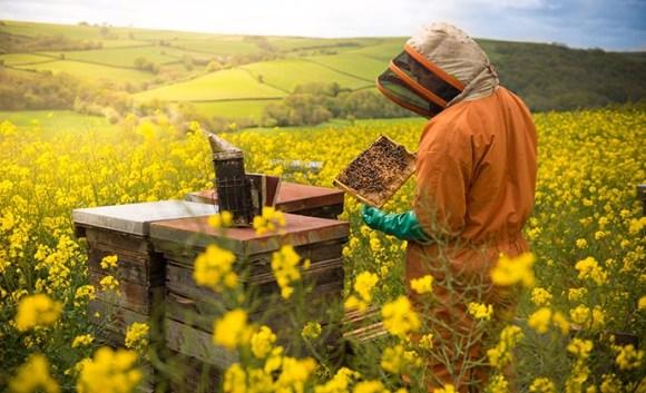 Quince Honey Farm North Devon England UK by Quince Honey Farm