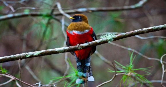 Birdwatching Colombia by Christopher Colanje