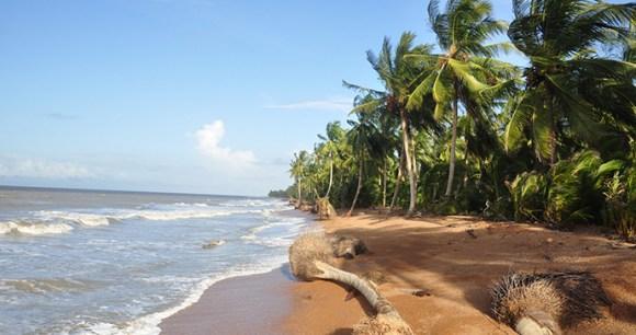 Shell Beach Guyana by Marco Farouk-Basir, Wikimedia Commons