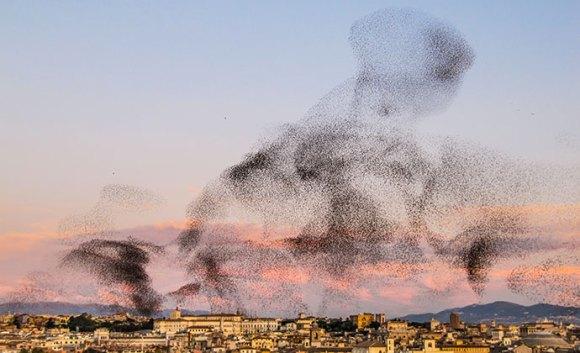 Starling murmuration, Rome, Italy by Paul Jover