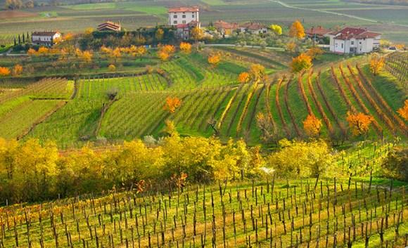 The Collio wine region Friuli Venezia Giulia Italy by Luciano Mortula, LGM Shutterstock