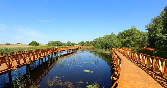 Kopacki rit wetlands Croatia by Misalalic, Wikimedia Commons