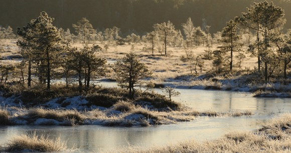 Sooma National Park, Estonia