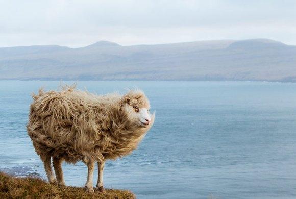Kirkjubøur Faroe Islands by Michelle Geerardyn