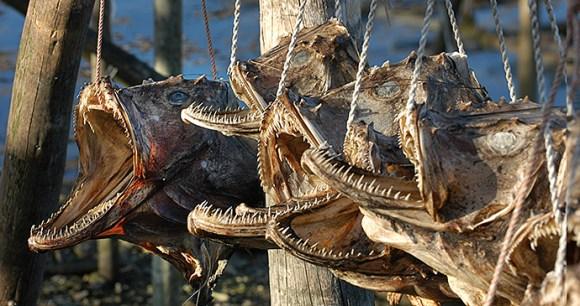 Dried Fish Museum Lofoten Norway Lapland by Ernst Furuhatt, www.nordnorge.com