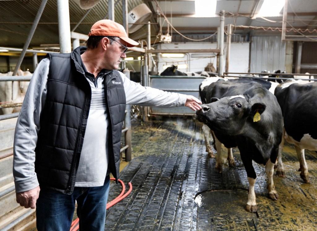 Harry DeWit reaches out to pet a cow after it was milked Monday, March 5, 2018, at Blue Sky Farms High Plains Dairy near Friona, Texas. (Brad Tollefson/Pioneers Magazine)