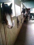 In the stables