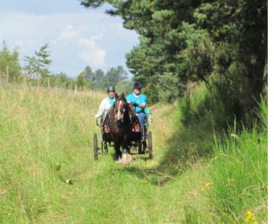 Ride Drive For Once Everyone On John >> Carriage Driving Pre 2013 The Brae Riding For The Disabled