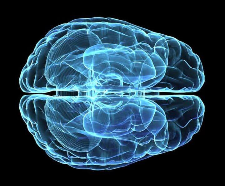 腦神經科小教室
