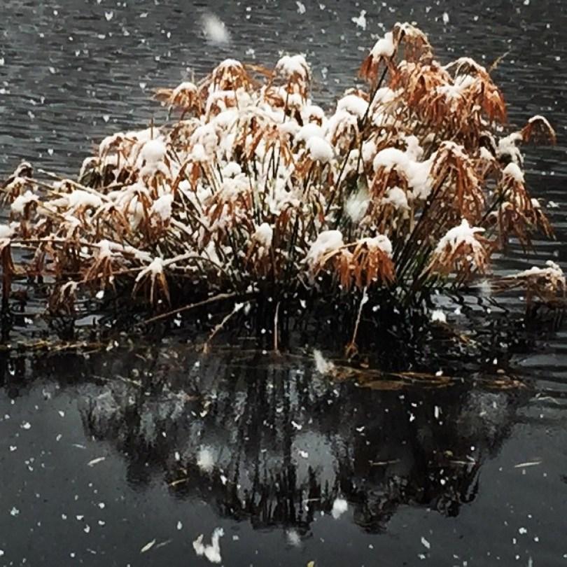 snow-las-cruces10