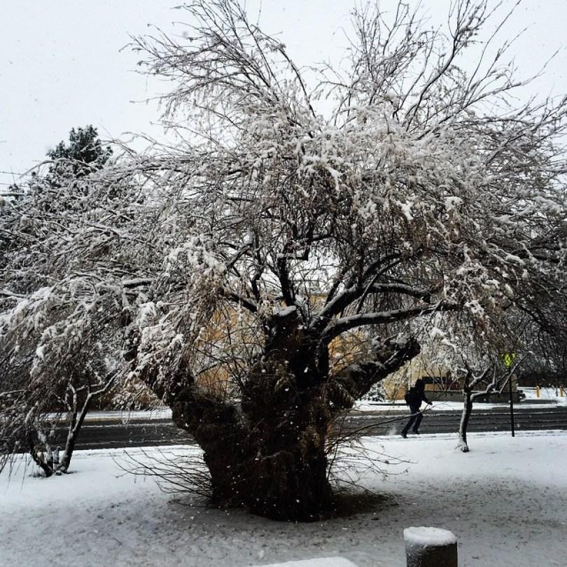 snow-las-cruces11