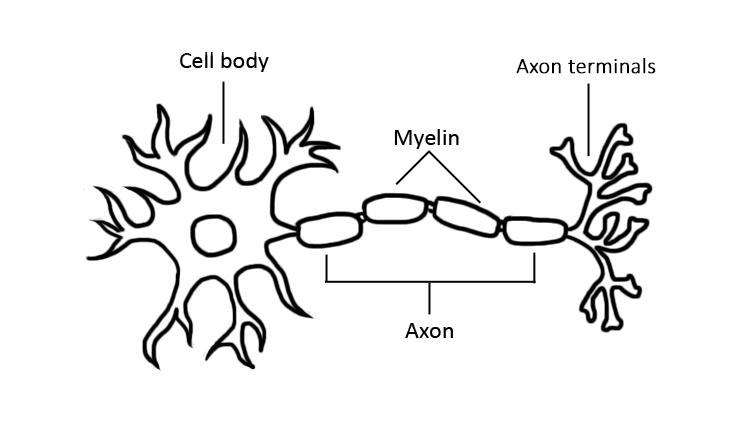 Light-Up Neuron