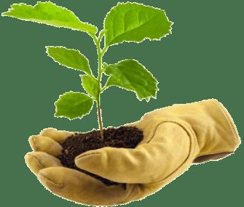 hand_glove_plant