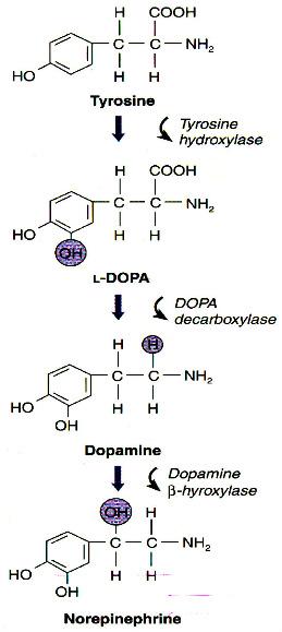 Cross-talk dopamine and innate immunity figure 1