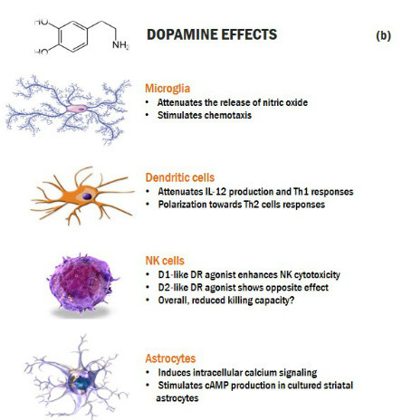 Cross-talk dopamine and innate immunity figure 3b