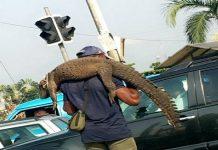 Man Caught Hawking 'Crocodile' In Port Harcourt Traffic