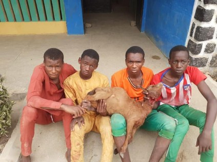 Four Teenagers Arrested For Stealing Goats In Kano
