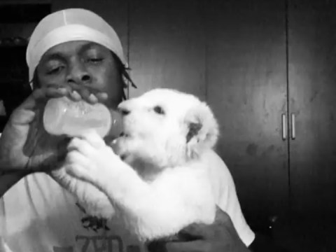 Runtown Acquires New Pet Lion