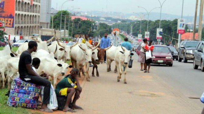 Open Grazing- 105 Cows, 4 Sheep Seized In Benue