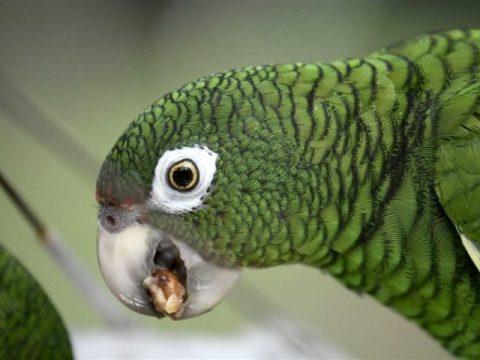 For Alerting Drug Dealers Police Were Coming Parrot Get 'Arrested'