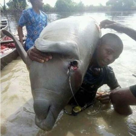 Residents Killed Huge Sea Cow In Taraba State