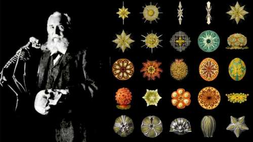 Ernst Haeckel: Intersection of art and science