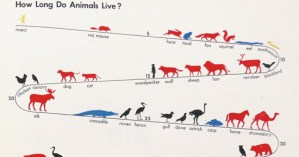 The Invention of ISOTYPE: How a Vintage Visual Language Paved the Way for the Infographics Age