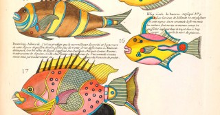 Natural Histories: 500 Years of Rare Science Illustrations