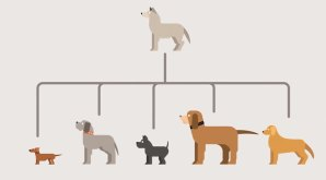 How Evolution Works, Animated in Minimalist Motion Graphics