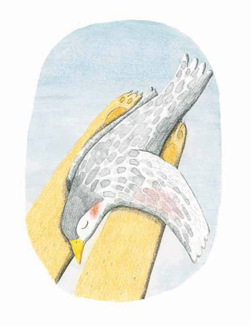 The Lion and the Bird: A Tender Illustrated Story About
