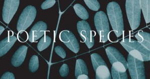 The Poetic Species: Legendary Sociobiologist E.O. Wilson in Conversation with Poet Laureate Robert Hass on Science and Poetry