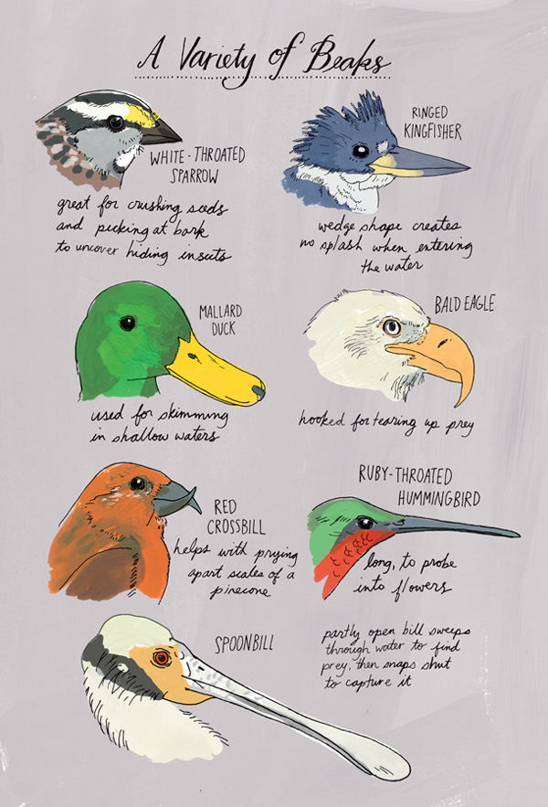 Nature Anatomy: A Glorious Illustrated Love Letter to Curiosity and ...