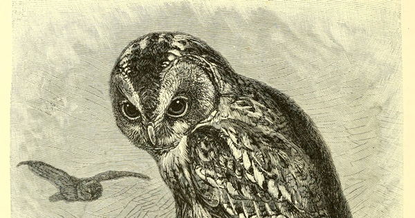 Of Owls and Roses: Mary Oliver on Happiness, Terror, and the Sublime Interconnectedness of Life