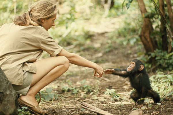 How a Dream Came True: Young Jane Goodall's Exuberant Letters and Diary  Entries from Africa – Brain Pickings