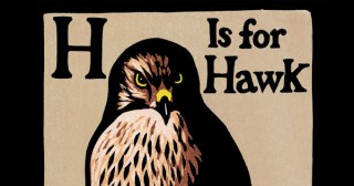 How a Hawk Clarifies Love and Loss, Beauty and Terror, Control and Surrender