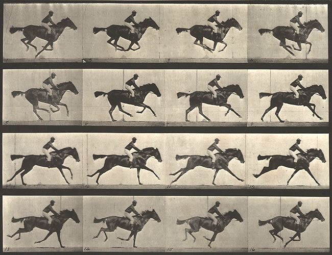 Eadweard Muybridge: The Horse in Motion