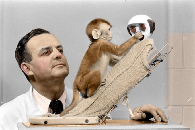 Harry Harlow observes a baby monkey interact with the cloth mother
