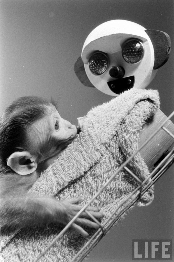 One of Harlow's baby rhesus monkeys with its wire-and-cloth mother