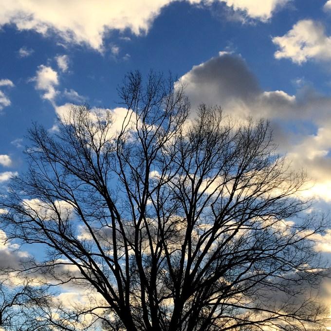 Tree by Maria Popova